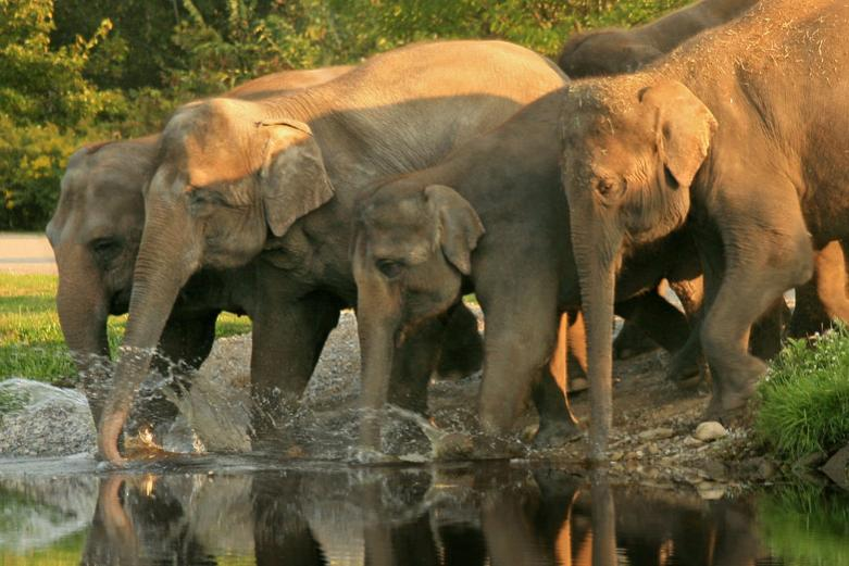 MUDUMALAI WILDLIFE SANCTUARY - NATIONAL PARK